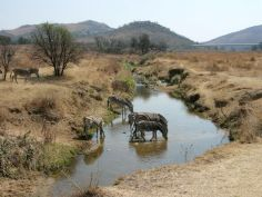 Hiking Klipriviersberg Johannesburg-2