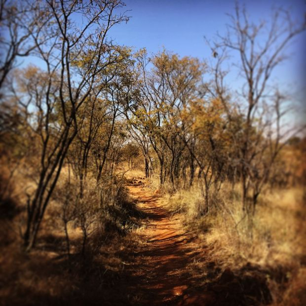 Sunday Hiking and Walk-Klipriviersberg­ Nature Reserve (5K Walk; 11K and 13K Hikes) - 4 June 2017