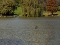 Kensington - A Walk Through Living History 27 April 2014 009