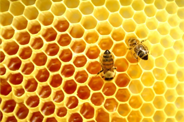 The Buzz About Honey